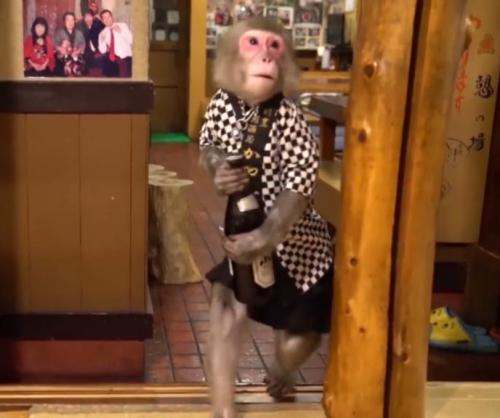 Japanese Bar Employs Monkeys as Waiters