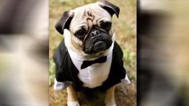 Arkansas Woman Admits Using County Cash to Buy Dog Tuxedo