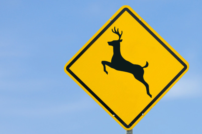 Dumb drivers force Iowa officials to confirm 'deer can't read' road signs