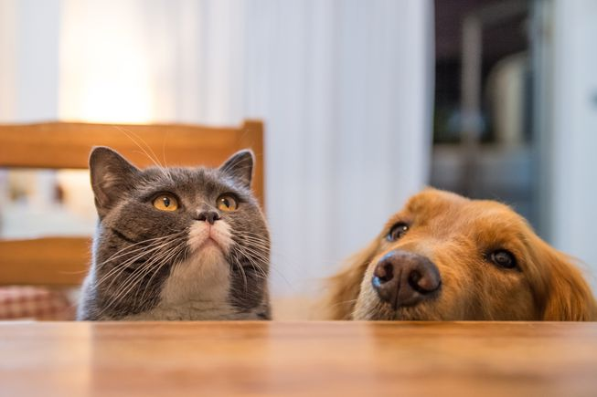 Which Thanksgiving Foods Are Safe for Pets?