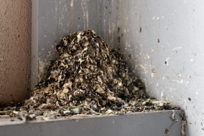 City to clean up bird poop - by getting rid of Pigeons