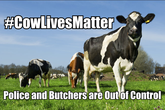 Cows lives matter