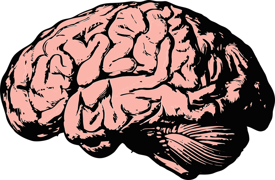 A Mini Brain Was Grown In A Lab