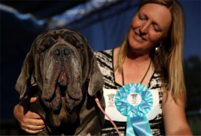 World's Ugliest Dog?