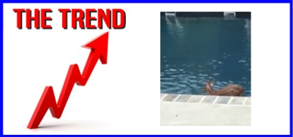 """The KICKS 106.3 Morning Trend: """"Fawning"""" Over A Pool!"""