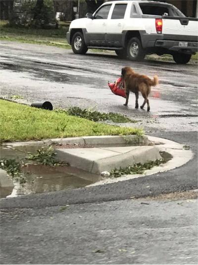 Texas Dogs Are Tough!
