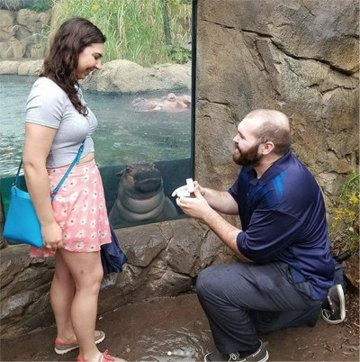 Fiona The Baby Hippo Gives Blessing To Engagement