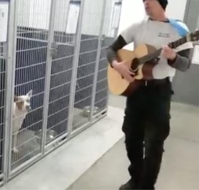 Country Music Can Sooth The Dogs!