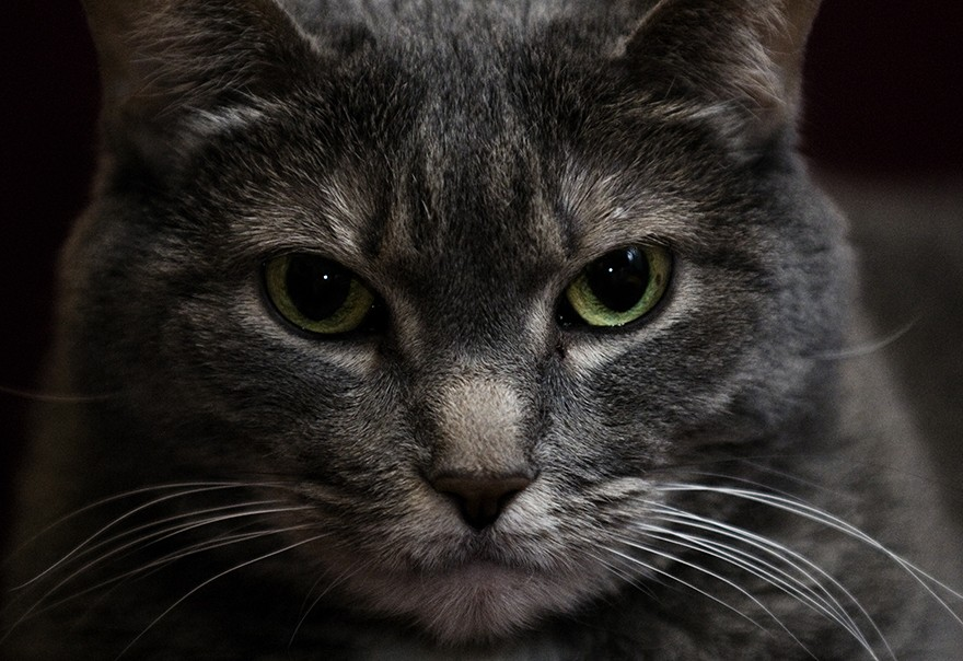 Your Cat Would Kill You If It Were Bigger