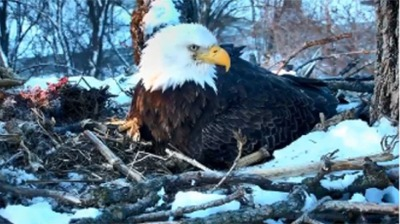 Five Great Webcams For Bird Watching