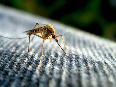 Did We Make The List Of The Top 50 Mosquito Cities?