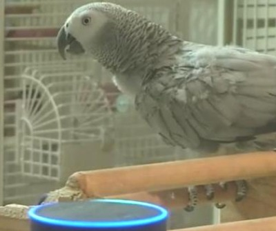 Petra The Parrot Is In Love With Alexa