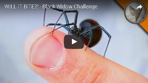 The Black Widow Challenge