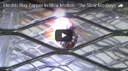 Slow Mo Guys: Bug Zapping