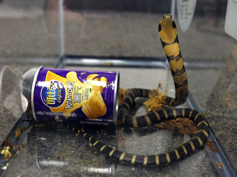 Snakes in a Can