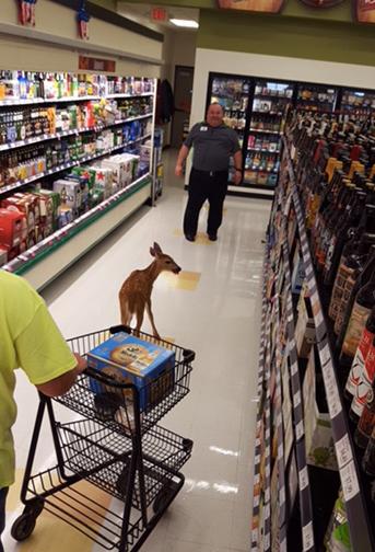 Deer Looking to Buy Alcohol
