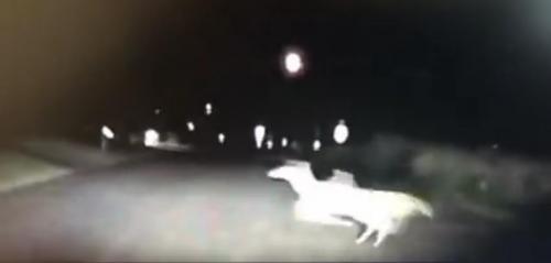 Athletic Deer