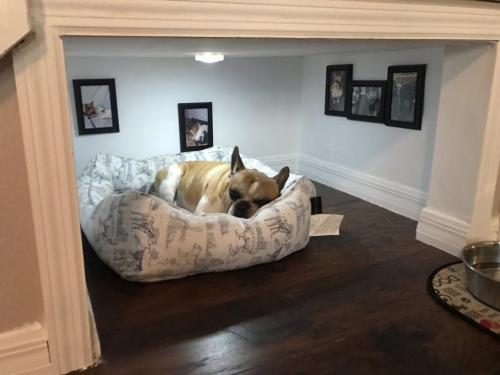 Room For the Dog