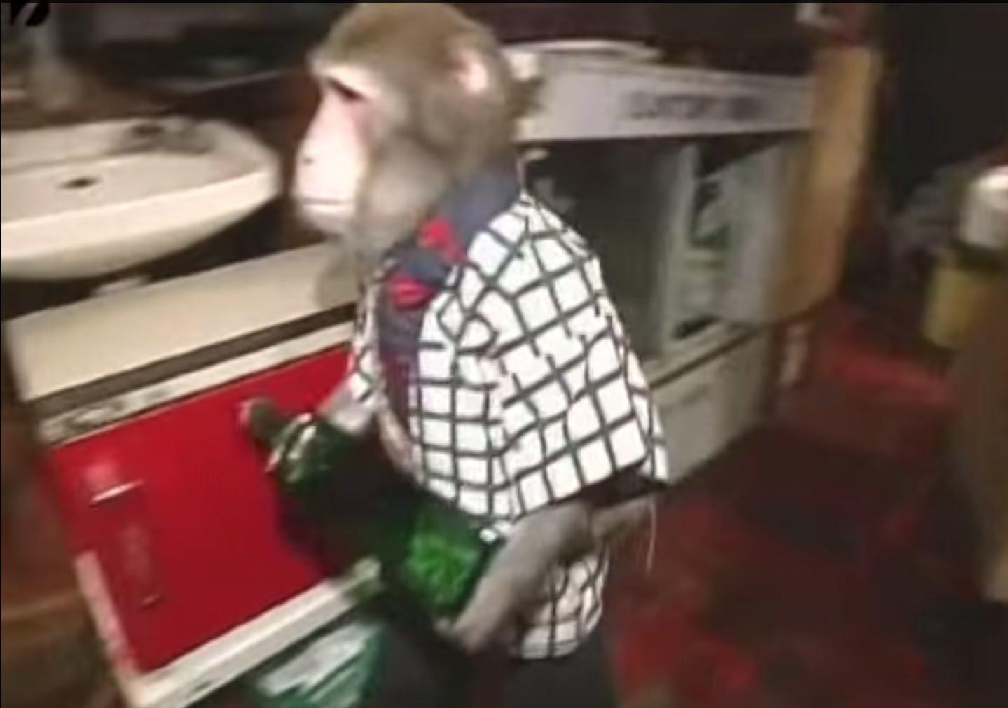 Working Monkeys