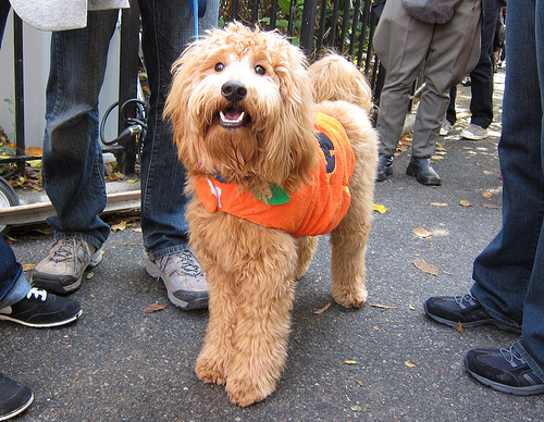 10 Most Popular Pet Costumes This Halloween