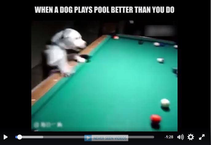 Dog Playing Pool