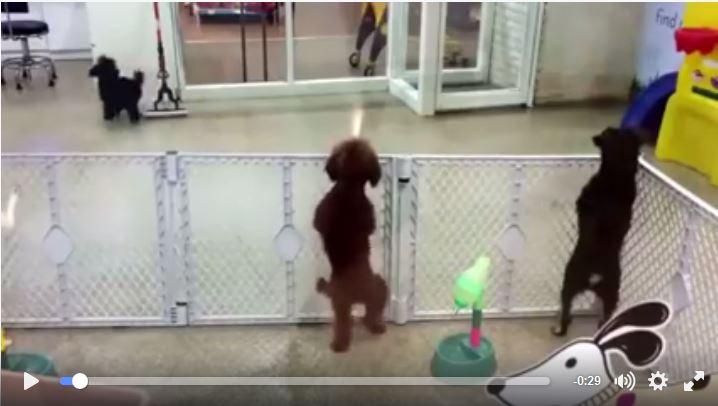 Super Cute Dancing Dog