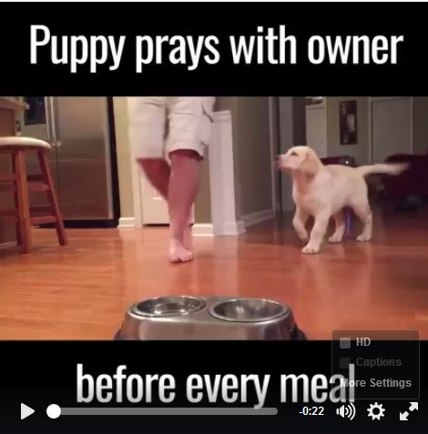 Puppy Prays with Owner Before Dinner