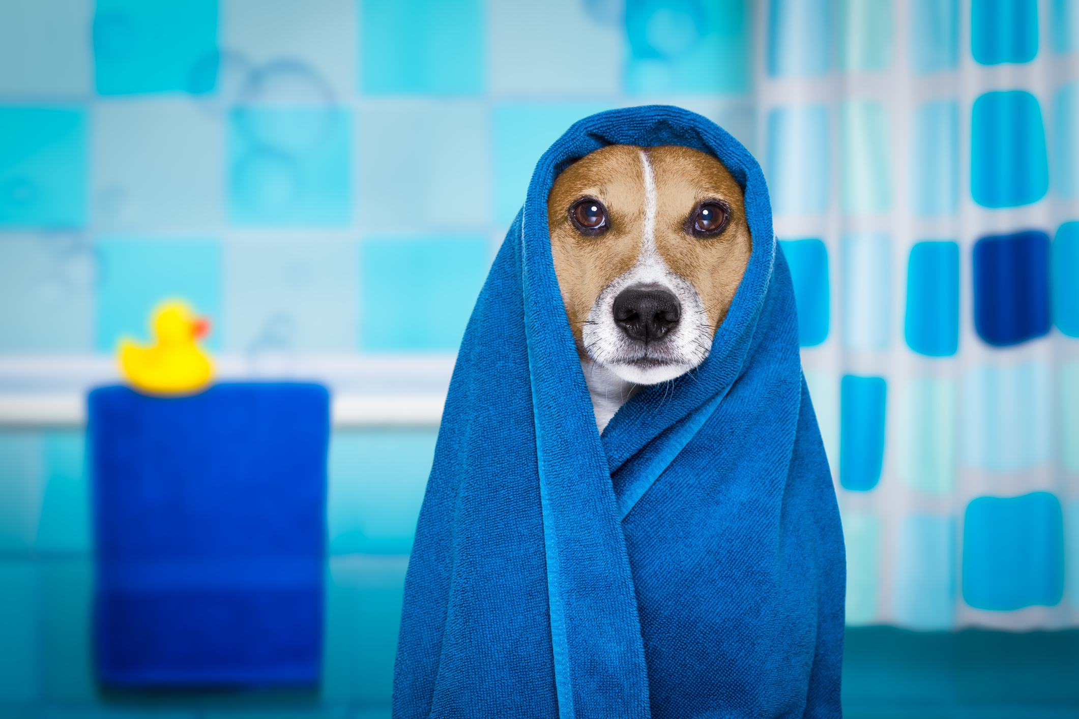 Comfort 101: Is a Shower Better or a Bath to Save Water?