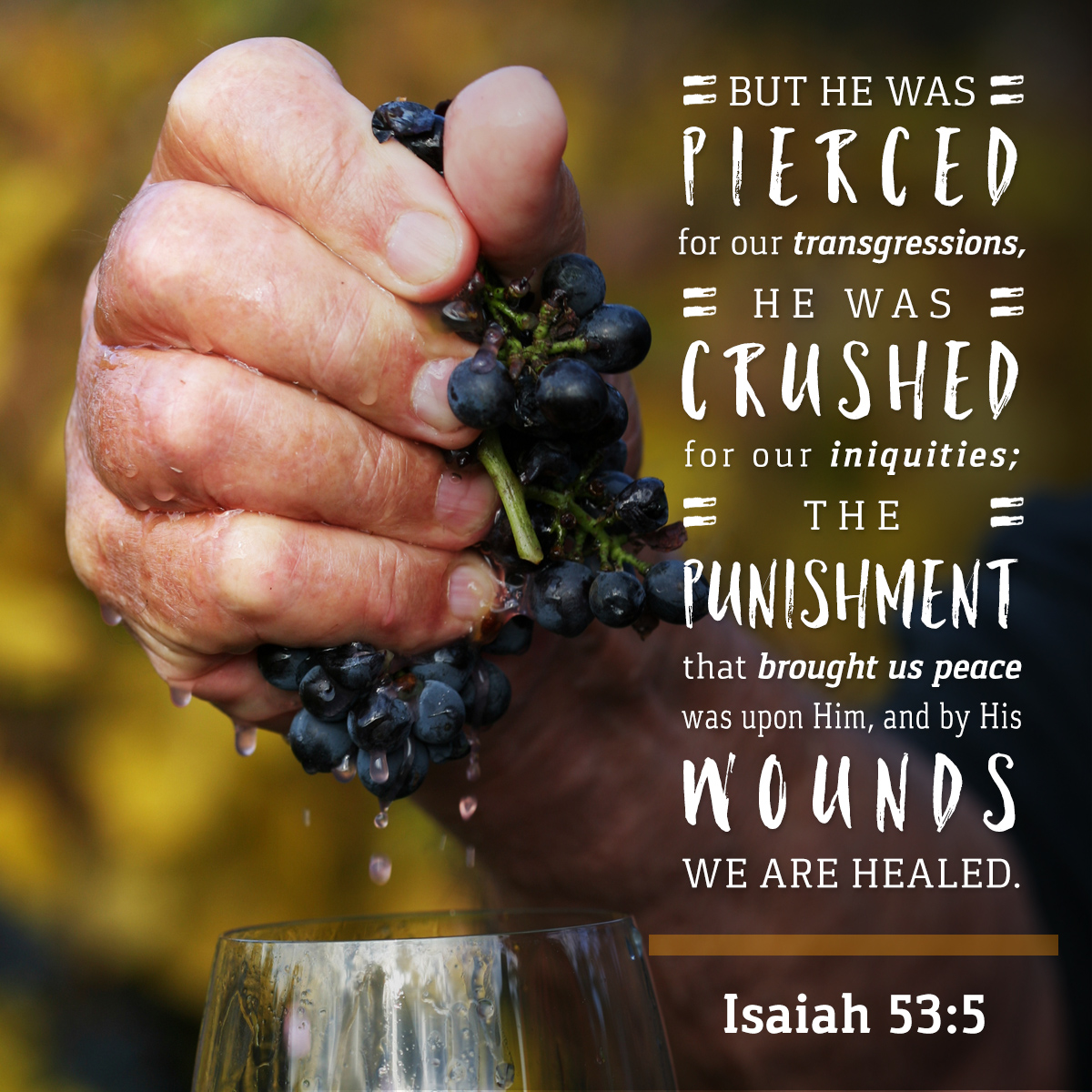 Isaiah 53:5 - Daily Verse
