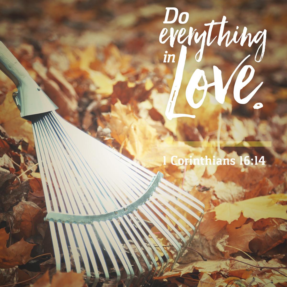 1 Corinthians 16:14 - Daily Verse