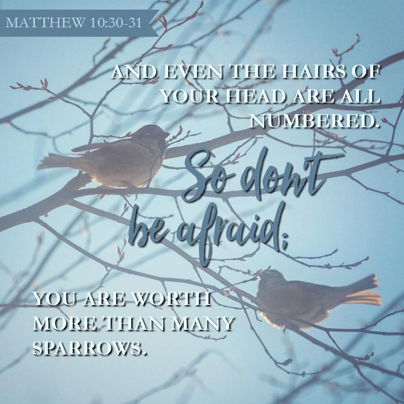 Matthew 10:30-31