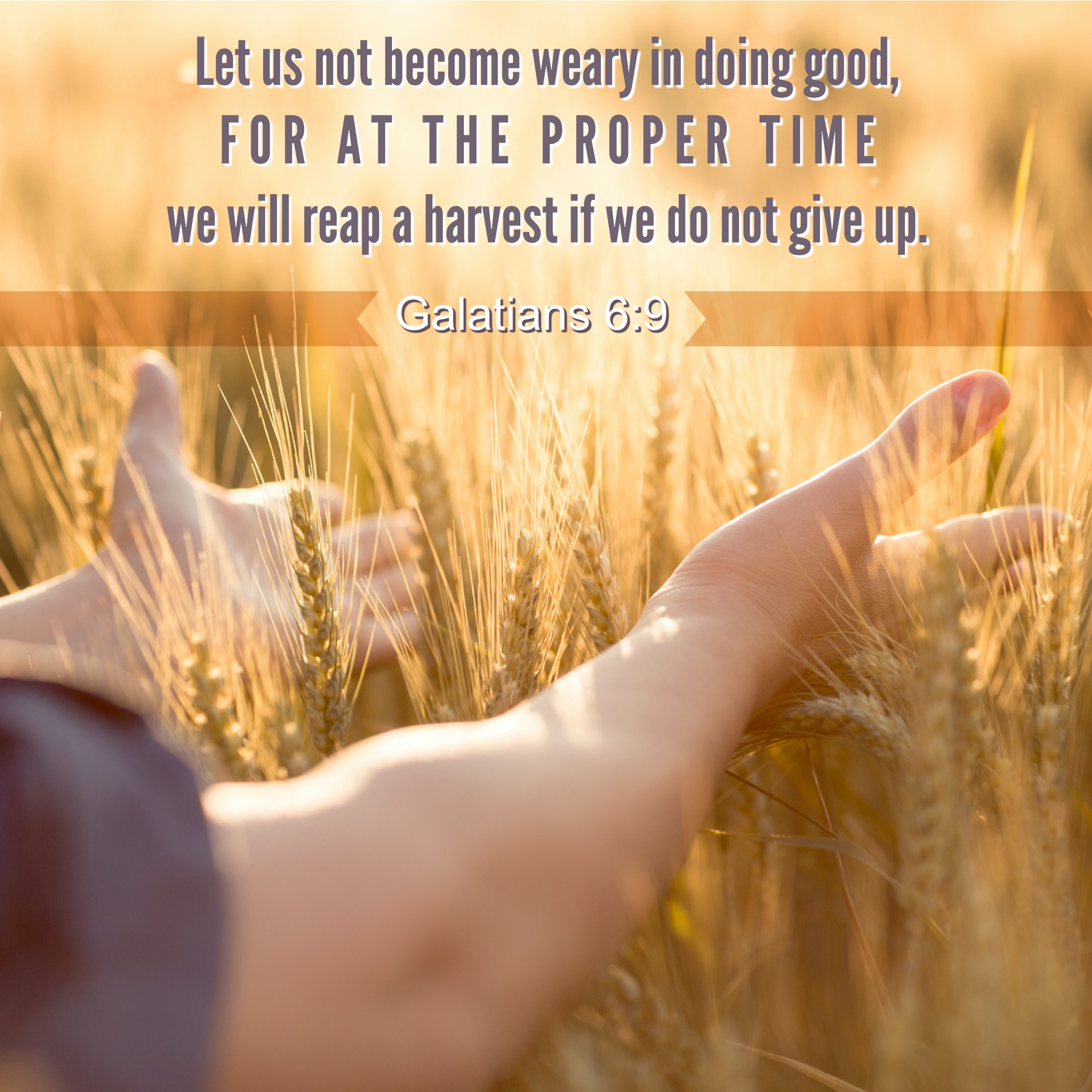 Daily Verse: Galatians 6:9