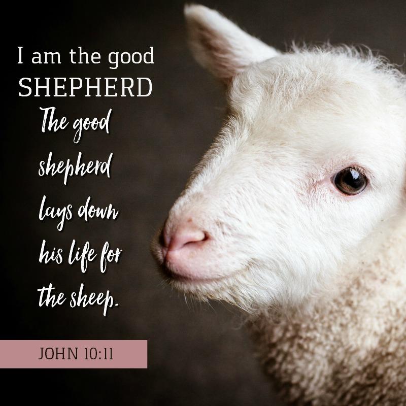Daily Verse: John 10:11