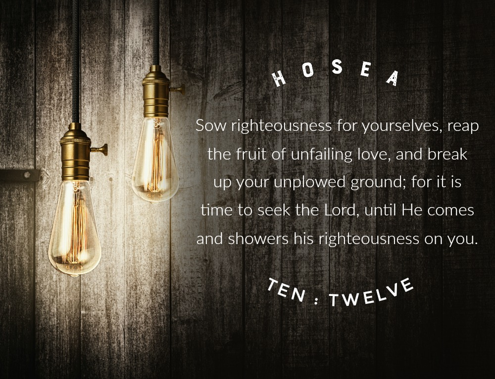Daily Verse: Hosea 10:12