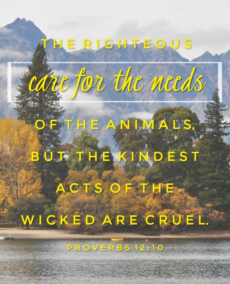 Daily Verse: Proverbs 12:10