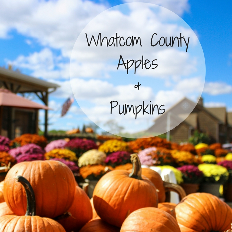 Whatcom County Apples & Pumpkins
