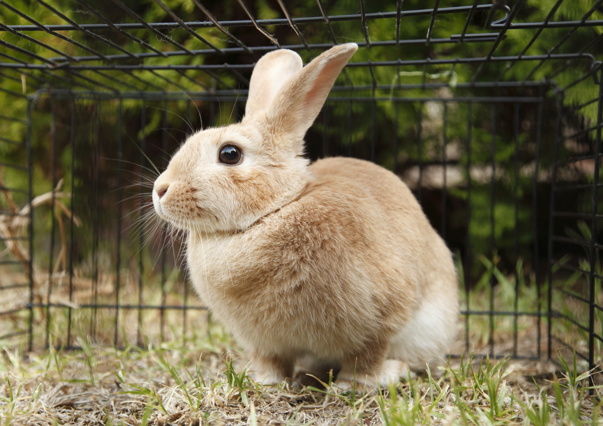 Summer Outing Idea: Visit an Animal Rescue