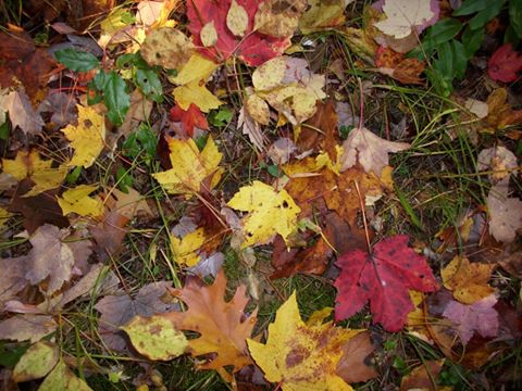 Peak Fall Foliage Expected For Finger Lakes This Weekend