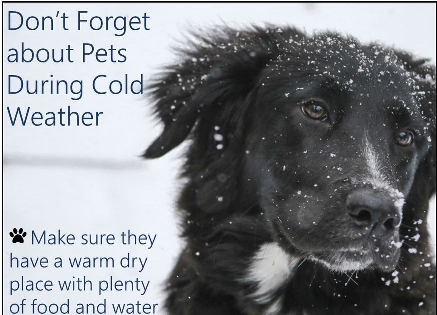 The Weather Is Not Fit For Man Or Beast; Bring Pets Inside