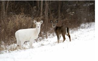 Deer Haven Park Offering Winter Tours