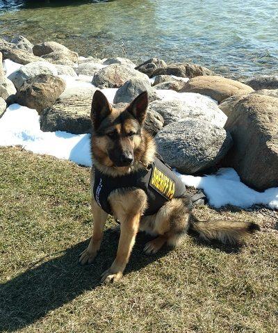 Ontario Sheriff's K9 Fennell Receives Bulletproof Vest