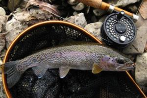 Trout Fishing Season Starts Sunday