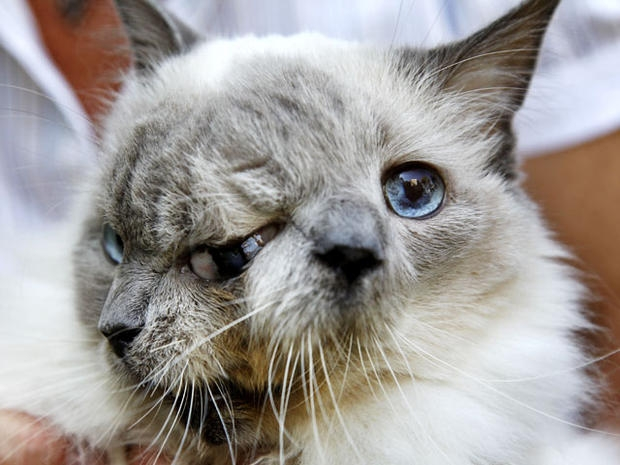 Louie/ Frank the two-faced cat has died.