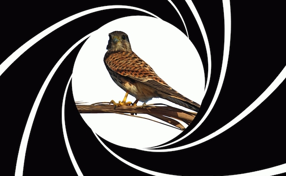Bird, James Bird...