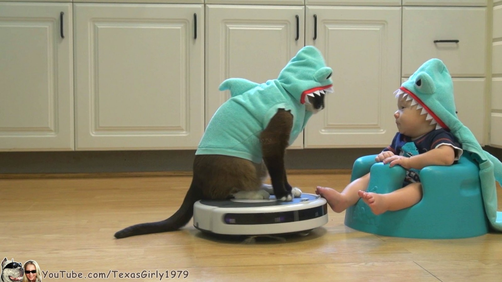Shark Cat on a Roomba with his new sidekick....