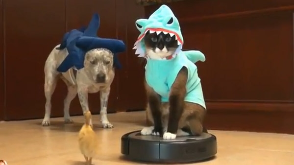 Shark cat, duck and dog..... For your coffee break......