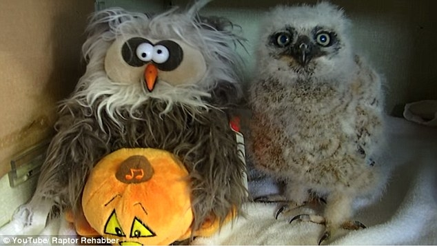 Oakley the Owl + The Monster Mash = Halloween gold *WATCH*