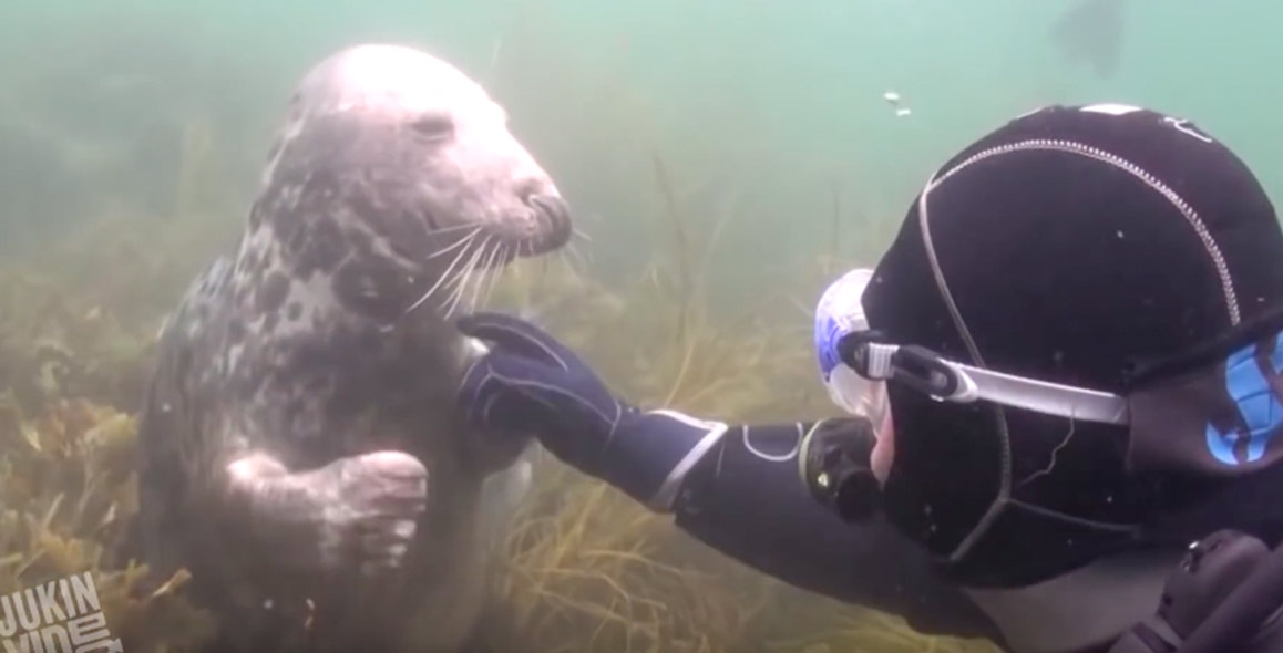 Friendliest seal ever. *VIDEO*