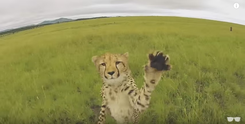 Coffee Break Videos of Wildlife and Drones....