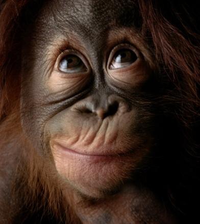 Tinder For Orangutans?